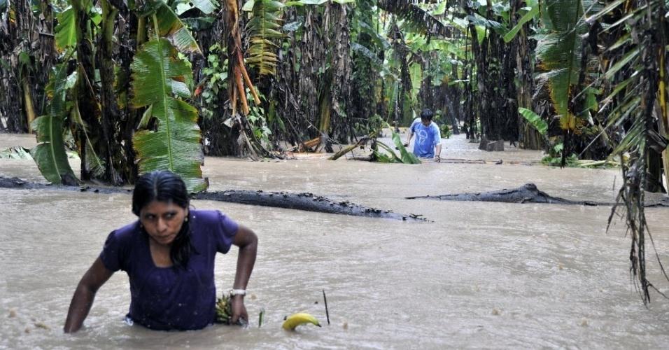 5.fev.2014 - Duas pessoas colhem bananas de uma plantação inundada em Puerto Yumani, nordeste da Bolívia. O governo boliviano declarou emergência nacional devido a inundações causadas pelas fortes chuvas que, até agora, deixaram mais de 40 mortos e afetaram aproximadamente 37 mil famílias