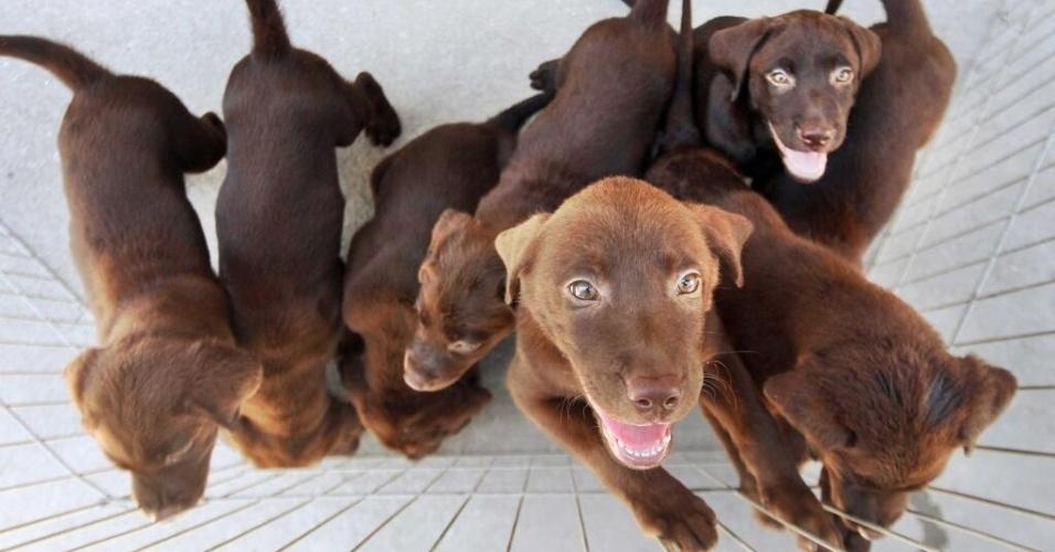6.fev.2014 - A Polícia Militar do Rio de Janeiro publicou em seu Twitter, nesta quinta-feira (6), foto de alguns filhotes do Batalhão de Cães que serão treinados para atuar na corporação e nas Olimpíadas