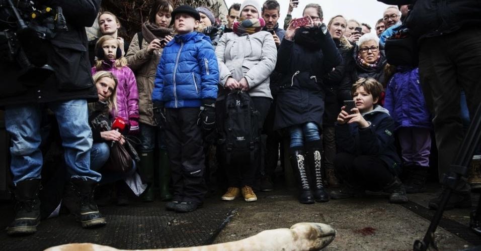 9.fev.2014 - Marius, uma jovem girafa, macho e perfeitamente saudável foi morto a tiros e autopsiado na presença de visitantes no Zoo de Copenhagem neste domingo (9). Apesar de uma petição on-line para salvá-lo, assinada por milhares de amantes dos animais, Marius, de apenas 18 meses de idade foi morto