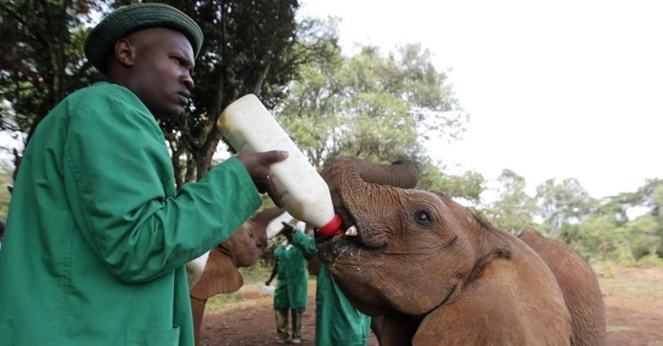 12.fev.2014 - Homem alimenta filhote de elefante órfão no Daphne Sheldrick Wildlife Trust, dentro do parque Nacional de Nairóbi, capital do Quênia. O orfanato é administrado por Daphne Sheldrick, esposa do famoso naturalista  David William Sheldrick, que morreu em junho de 1977