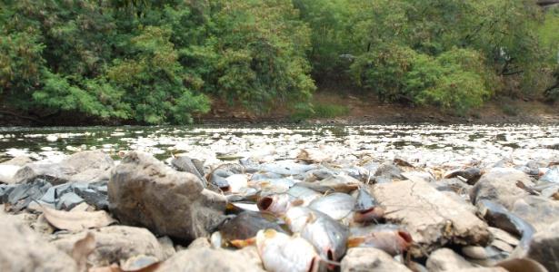 Milhares de peixes são encontrados mortos no rio Piracicaba, em Piracicaba, no interior de São Paulo, nesta quarta-feira (12)