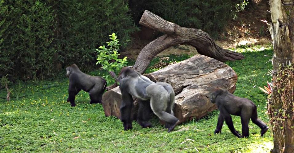 dansk ladyboy lind trup zoo
