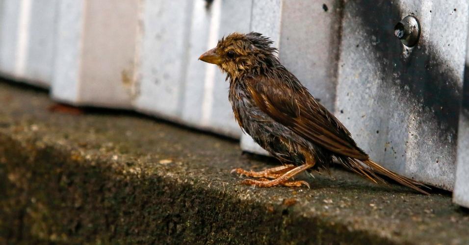 14.fev.2014 - Pássaro é atingido por chuva na região da Freguesia do Ó, em São Paulo, SP, nesta sexta-feira (14)