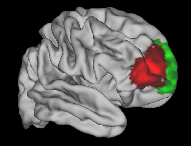 Imagem mostra área do córtex frontal do cérebro em vermelho: região que parece ser exclusiva de humanos