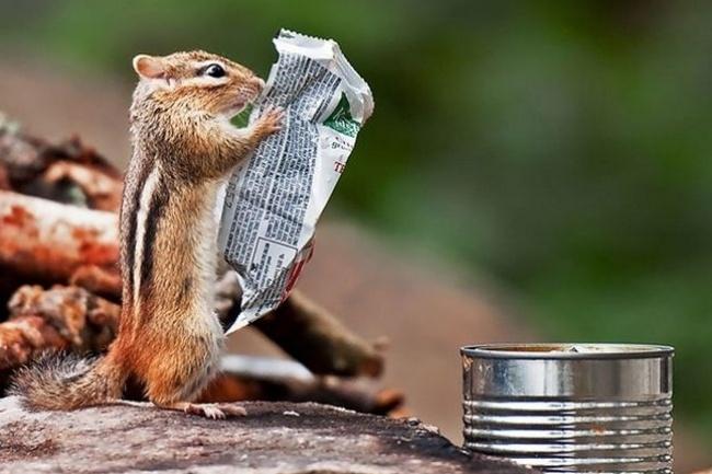 19.fev.2014 - Até os esquilos gostam de ficar bem informados