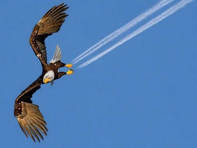 19.fev.2014 - Parece que a águia está rasgando o céu, mas é apenas uma nuvem que foi registrada exatamente nas patas do animal