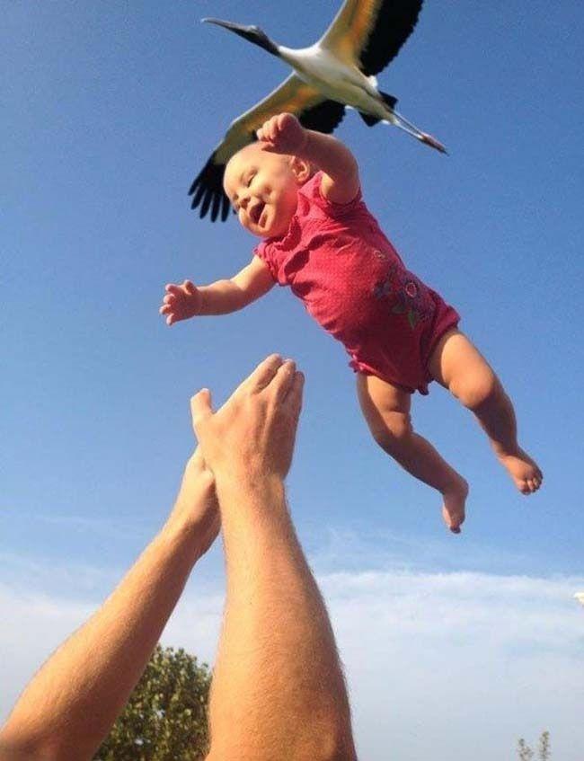 A prova de que são as cegonhas que entregam os bebês