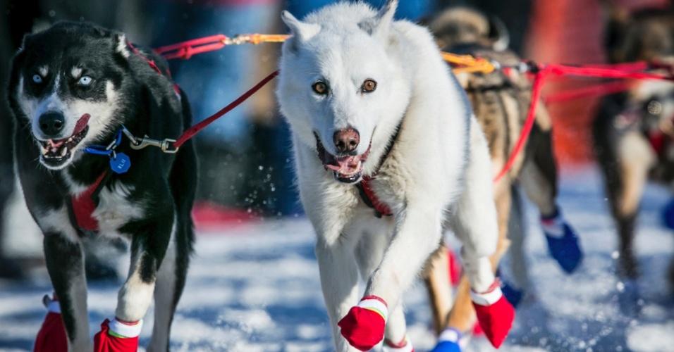 2.mar.2014 - Equipe de Marcelle Fressineau lidera corrida de cães de trenó em Willow, no Alasca (EUA), no domingo (2). A competição, chamada de Iditarod Trail Sled Dog, comemora uma missão de resgate 1925 que levou soro para a comunidade costeira de Nome