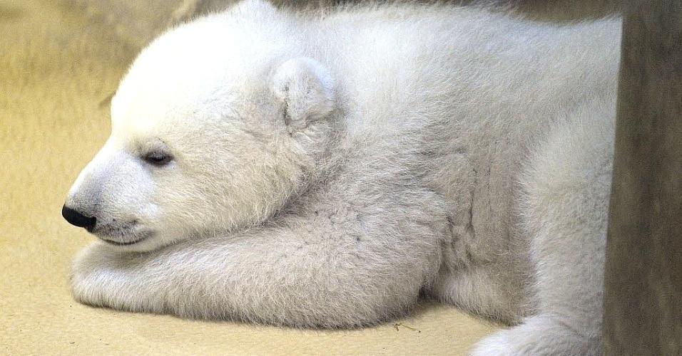 12.fev.2014 - Filhote de urso polar dorme em zoológico de Bremerhaven, Alemanha. O urso nasceu no dia 16 de dezembro e fez sua primeira aparição pública nesta quarta-feira (12)