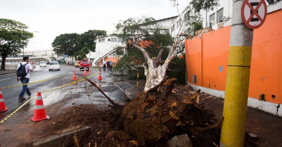 18.mar.2014 - Árvore caiu sobre quatro carros no acesso para o aeroporto de Congonhas, na zona sul de São Paulo, próximo à área de desembarque, após forte chuva que atingiu a capital paulista no inicio na tarde desta terça-feira (18). Segundo a Defesa Civil da cidade, ao menos 100 atendimentos foram feitos pelas equipes da prefeitura por causa das chuvas, que incluem 17 casos de quedas de árvore. Até as 19h47, havia 54 semáforos apagados e 11 em amarelo intermitente na cidade, totalizando 65 ocorrências ativas. De acordo com a CET (Companhia de Engenharia de Tráfego de São Paulo), os números estão dentro da média de um dia sem chuvas, quando são registradas, em média, de 65 a 70 ocorrências semafóricas. Partes do bairro da Pombeia, na zona oeste da capital paulista, ficaram sem energia elétrica por pelo menos quatro horas. Além disso, as fortes chuvas causaram colisões entre veículos em ruas alagadas e paralisação de trens da linha 8-Diamante CPTM (Companhia Paulista de Trens Metropolitanos)