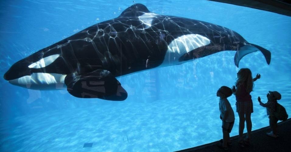 19.mar.2014 - Crianças ficam felizes ao ver uma Orca, baleia assassina, durante uma visita ao SeaWorld, parque temático em San Diego, na Califórnia, nos Estados Unidos