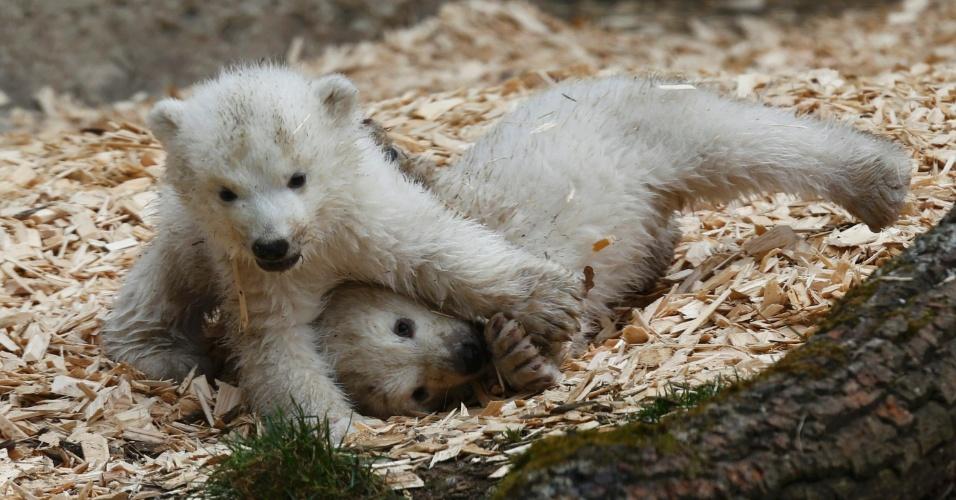19.mar.2014 - Filhotes de urso polar brincam em sua primeira aparição no zoológico Hellabrunn, em Munique, na Alemanha. Com 14 semanas de idade, os filhotes ainda não têm nome