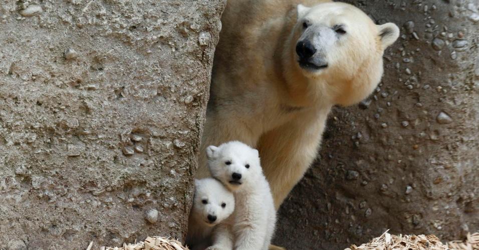 19.mar.2014 - Filhotes de urso polar fazem sua primeira aparição ao público no zoológico Hellabrunn, em Munique, na Alemanha. Com 14 semanas de idade, os filhotes ainda não têm nome