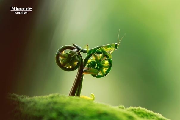 19.mar.2014 - O inseto não está motorizado