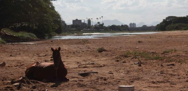 Cavalo descansa em local que costuma ser banhado pelo rio Paraíba do Sul, que enfrenta seca no Rio de Janeiro