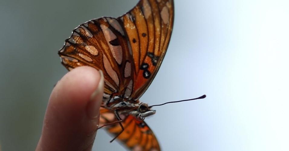 20.mar.2014 - Uma borboleta pousa no dedo de um visitante do jardim polinizador, no Museu de História Natural de Los Angeles, na Califórnia