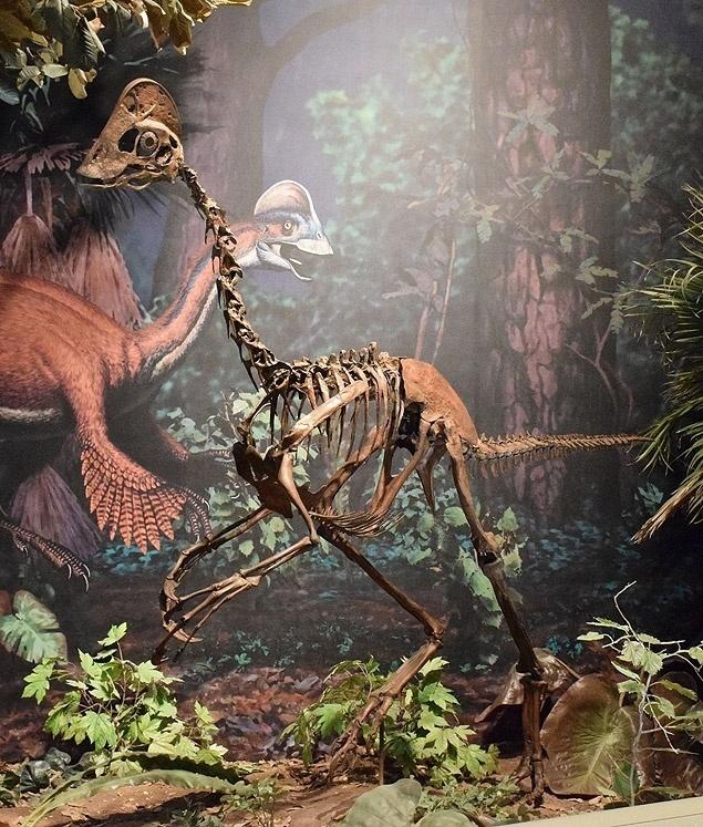 Novo dinossauro com aparência de galinha dá pistas sobre evolução de seu grupo