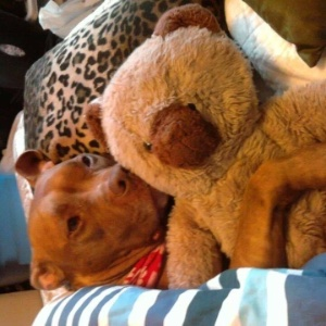 24.mar.2014 - O dono deste ursinho de pelúcia que até o cachorro da família não vive sem busca seu amigo através da página no Facebook
