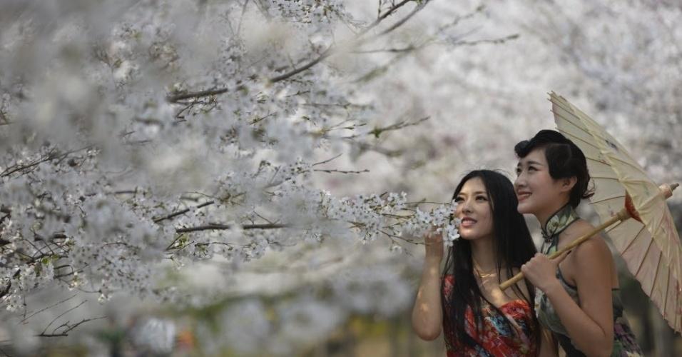 26.mar.2014 - Modelos posam com flores de cerejeira em montanha de Zouping, na China. Turistas de todo o país visitam o local para observar a paisagem