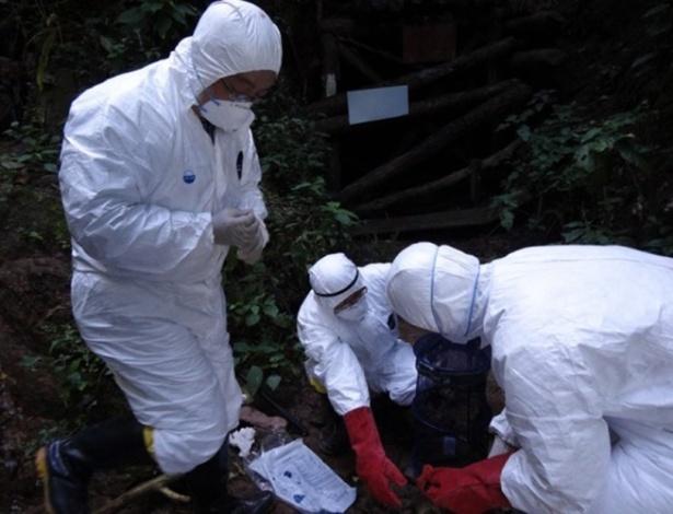 Pesquisadores chineses buscam vírus em caverna em Mojiang, na China