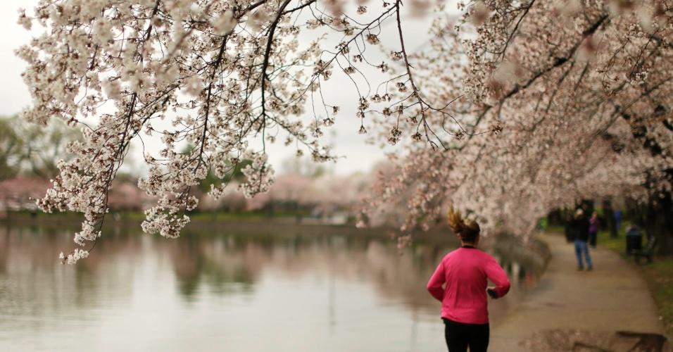 8.abr.2014 - Atleta corre em torno da bacia Tidal, em Washington, nos Estados Unidos, nesta terça-feira (8). As cerejeiras começaram a desabrochar e espera-se que elas floresçam ainda nesta semana