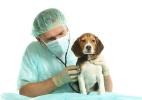 IR 2015: Posso deduzir gastos com veterinário? Bicho pode ser dependente? - Getty Images