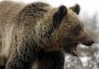 Guardas florestais falam sobre os turistas mais sem noção que já viram - Jim Urquhart/Reuters