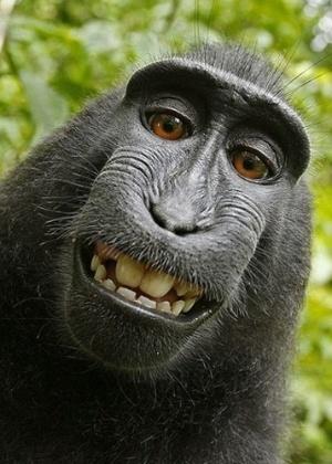 Foto registrada com câmera de David Slater entrou para seleção de melhores selfies animais do ''Daily Mail''