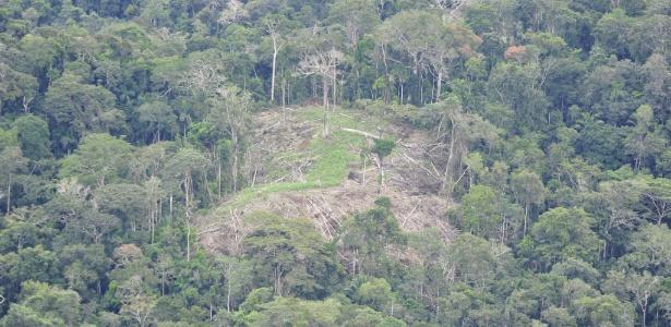 Roça de índios isolados do Alto Rio Envira é vista do alto em foto da Funai