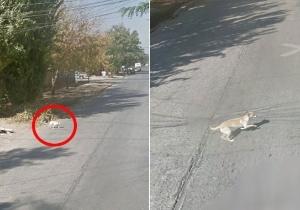 Reprodu��o/Street View