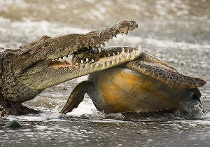 Alejandro Prieto/Wildlife Photographer of the Year