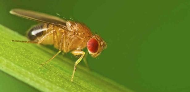 Biólogos encontram vínculos entre vermes, moscas e humanos