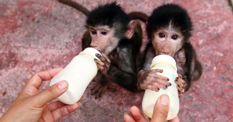 18.set.2014 - Filhotes de macaco são alimentados no zoológico de Hangzhou, na China. A imagem, de quarta-feira (17), foi divulgada nesta quinta-feira