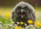 Fotos de animais em poses inusitadas e divertidas são premiadas em Londres