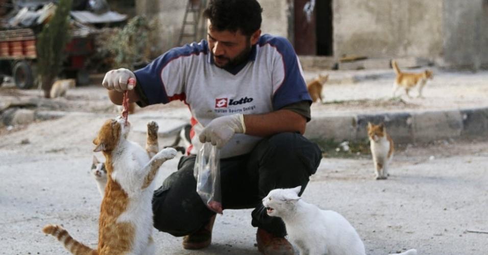 24.set.2014 - Alaa, um motorista de ambulância, alimenta gatos em Aleppo, na Síria, nesta quarta-feira (24). Alaa compra US$ 4 de carne todos os dias para alimentar cerca de 150 gatos abandonados por causa de bombardeios das forças leais ao ditador da Síria, Bashar Assad. Alaa disse que tem alimentado e cuidado dos gatos por mais de dois meses