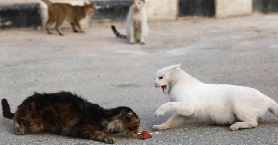 24.set.2014 - Alaa, um motorista de ambulância em Aleppo, na Síria, está se transformando em uma figura conhecida. Ele compra US$ 4 (cerca de R$ 9,60) em carne todos os dias para alimentar cerca de 150 gatos abandonados por seus donos durante os bombardeios das forças leais ao presidente Bashar al-Assad. Alaa disse que tem alimentado e cuidado dos gatos sozinho por mais de dois meses