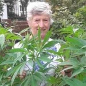 """Patricia Hewitson e as """"ervas daninhas"""""""