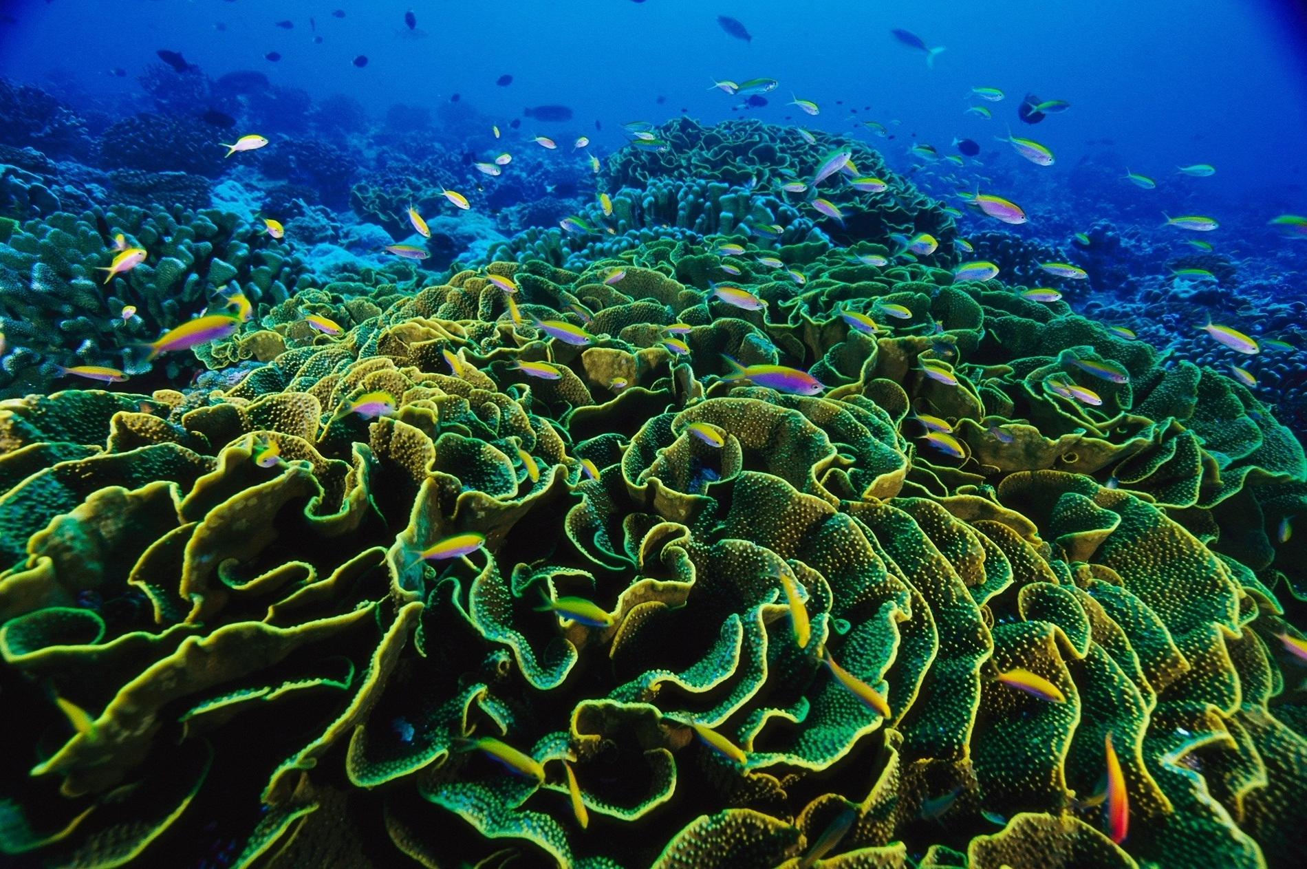 Tropical ocean animals and plants - photo#18