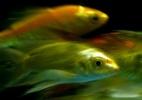 Clique Ciência: Os peixes bebem água? (Foto: Sergei Gapon/AFP)
