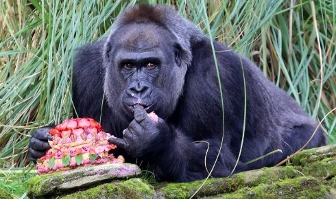 London Zoo/ AFP/ HO