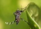 8 maneiras de se livrar dos mosquitos sem usar inseticida (Foto: Wikimedia Commons/Wikipedia)