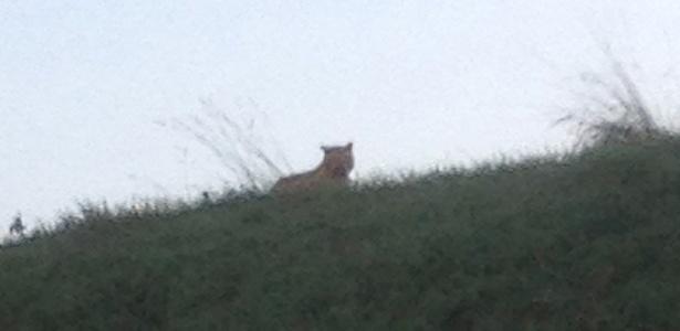Foto tirada por transeunte mostra tigre à solta em Montevrain, a leste de Paris