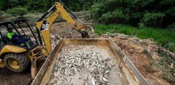 A mortandade de peixe é a maior já registrada no município, diz secretário