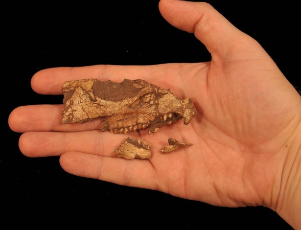 Fóssil do crânio Aquilops americanus
