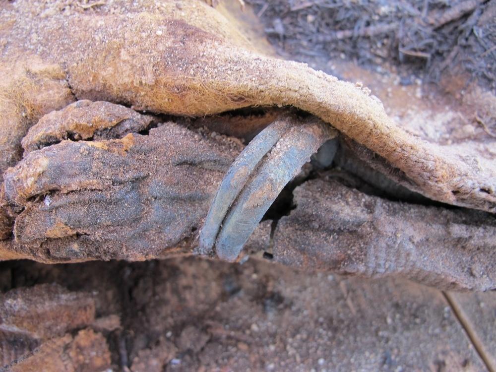 18.dez.2014 - Mais de 1.700 múmias foram desenterradas na região de Faiyum (96 km do Cairo), no Egito. Os corpos estavam conservados pelo deserto quente e seco. De acordo com os arqueólogos da Universidade Brigham Young, em Utah, que participam da escavação, o cemitério conta com mais de um milhão de corpos humanos mumificados