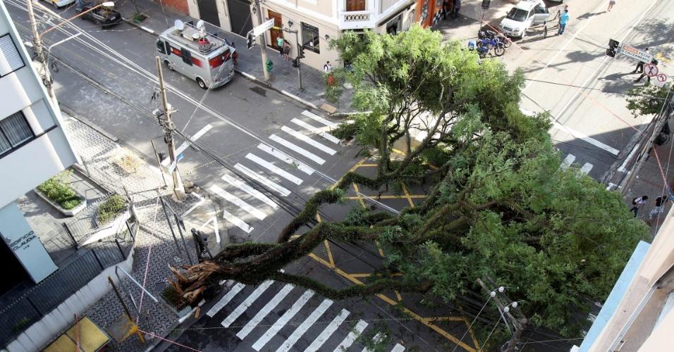 29.dez.2014 - Árvore que caiu na esquina das ruas Cubatão e Eça de Queiroz, no bairro da Vila Mariana, na zona sul de São Paulo, após forte chuva que atingiu a cidade na madrugada desta segunda-feira (29)