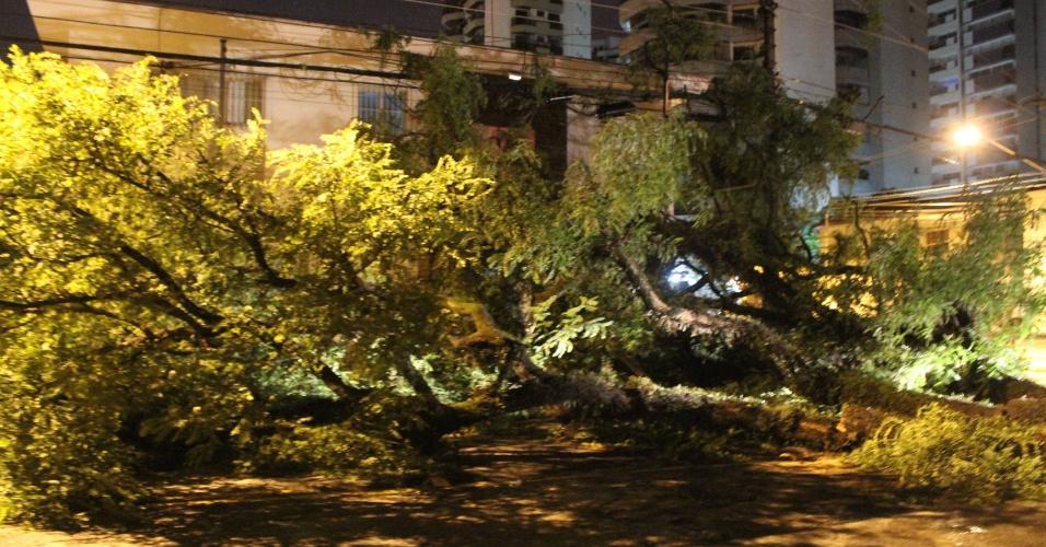 29.dez.2014 - Forte chuva na madrugada desta segunda-feira (29) derruba árvore de grande porte na rua João Álvares Soares, no bairro Campo Belo, zona sul de São Paulo. Mais de 100 árvores caíram com a chuva que atingiu a cidade