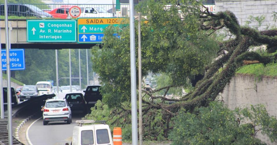 29.dez.2014 - Queda de árvore na Avenida Rubem Berta, paralela à avenida 23 de Maio, na altura do viaduto República Árabe Síria, na zona sul da capital paulista, provocou congestionamento na via nesta segunda-feira (29). Mais de 200 árvores caíram na cidade por causa da forte chuva na madrugada de hoje