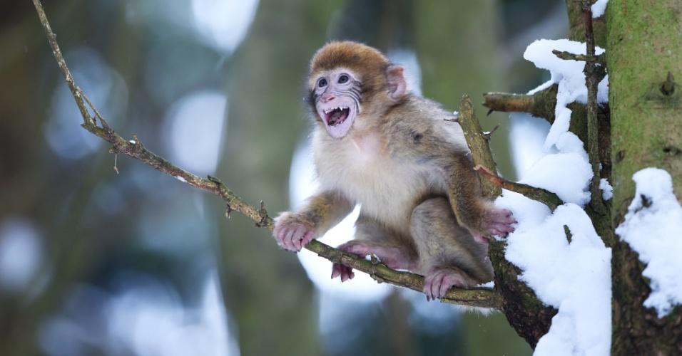 2.jan.2015 - Filhote de macaco com oito meses de vida brinca no jardim zoológico