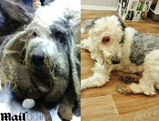 Cão leva horas para cortar pelo após ser trancado em apartamento por um ano